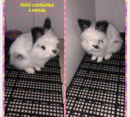 Título do anúncio: Mini coelhinha Lion