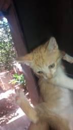 Lindos filhotes de gatos