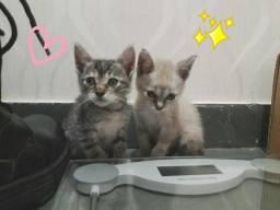 Adoção gato filhote