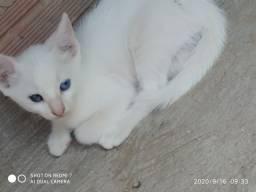 Doação de filhote de gato. Doação responsável