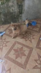 Cachorro Zeus