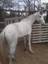 Título do anúncio: Cavalo mm registrado
