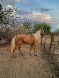 Título do anúncio: Vendo Cavalo TOP
