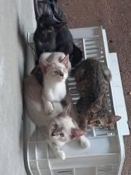 Título do anúncio: Gatinhas para adoção