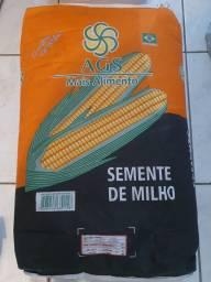 Título do anúncio: Milho para plantio