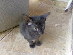 doacao solidaria lindos filhotes de gato itanhaem sp