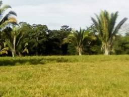 Vendo área Rural com 50 Hectares - Sentido Humaitá