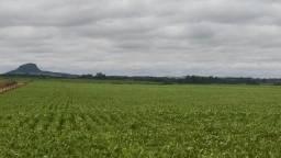 ,Fazenda rural à venda, terra roxa Ivailandia - PR.