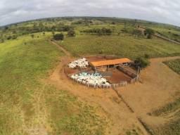 Fazenda Pecuária Maranhão