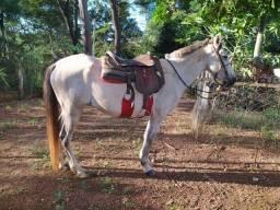 Égua nova mansa