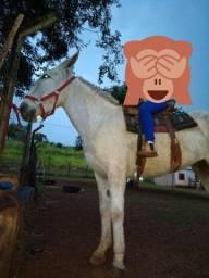 Mula cavalo