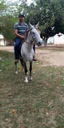 Vendo ou troco cavalo manga larga tordilho telefone