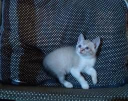 Doação de 4 gatinhos   Pet   Animal de estimação