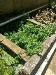 Plantas de Aquário a partir de RS 2,00