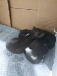 gatinhos filhotes!!