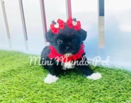 Shih tzu MINI Fêmea Black Linda
