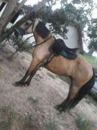 Cavalo postiço marcha troteada faço rolo
