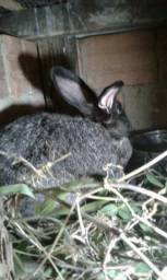 Coelha com 5 filhotes