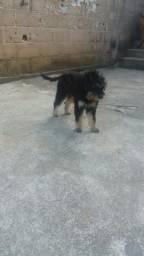 Doação de cachorra Viana sede