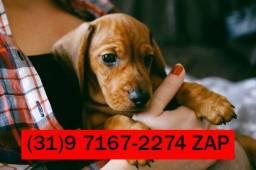 Agência Pets: Filhotes de Basset