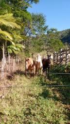 Cavalos e reboque zerado