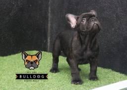 Bulldog francês tigrados