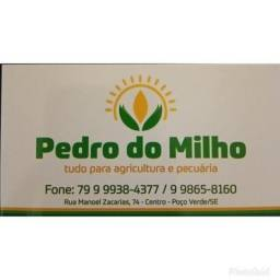Pedro do Milho