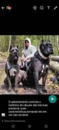 Adestramento inteligente:acalmando amente canina.