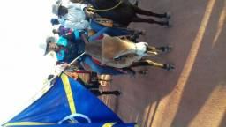 Touro de cavalgada