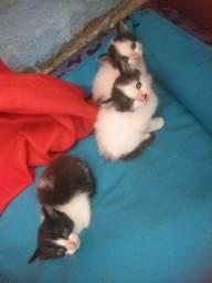 Doação. 3 gatinhos
