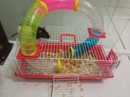 Gaiola com duas ratas twitter