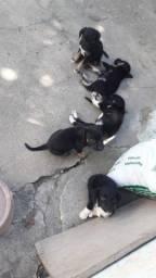 Adoção de 5 filhotes