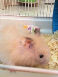 Lindo hamster manso