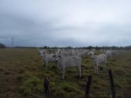 Fazenda com 110 hc, 4 casas, 3 poços, curral, riacho, barreiro, 5 cacimbões, muito pasto