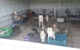 Adoção de Cachorros Resgatados