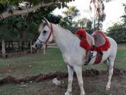 Vendo Cavalo Meio Sangue, Árabe 50% e Manga Larga 50%