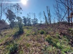Velleda aluga espetacular área de 1 hectare para plantio de hortaliças