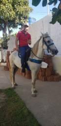 Cavalo Manga Larga Machador