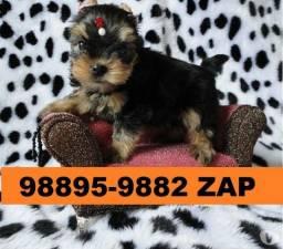 Canil Pet Mini Filhotes Cães BH Yorkshire Beagle Poodle Lhasa Maltês Shihtzu