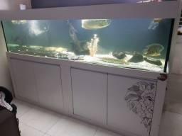 Aquário jumbo 2,50m 1250,litros
