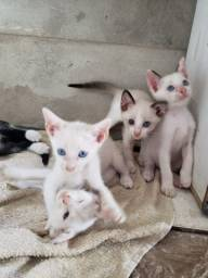 Gatinhos adoção entrego