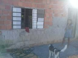 Vendo casa no conjunto João Paulo 2