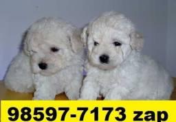Canil Filhotes Cães Top BH Poodle Lhasa Yorkshire Maltês Beagle Basset