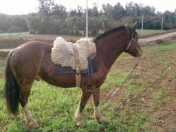 Cavalo Crioulo Douradilho