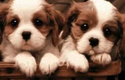 Cuidadora de cachorros domésticos