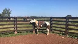 Tenho pent horse