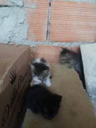 Doando 4 gatinhos, todos machos