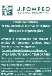 Vaga de emprego - trabalhador no cultivo de plantas