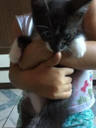 Doa-se filhote de Gato ?