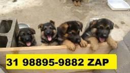 Canil Filhotes Cães Grande Porte BH Pastor Golden Labrador Akita Rottweiler